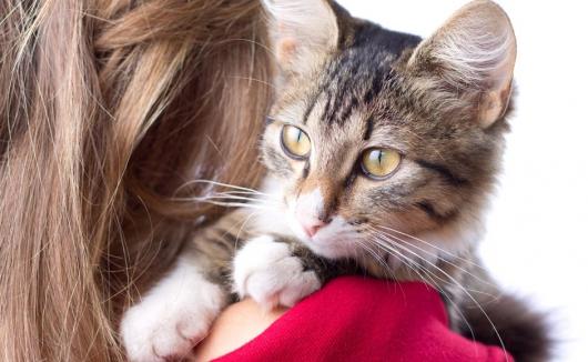 Tierarztpraxis Dr. Kamlage – Schulmedizin mit Herz