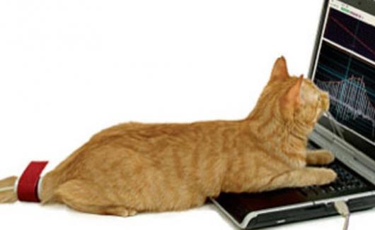 Blutdruckmessung bei der Katze