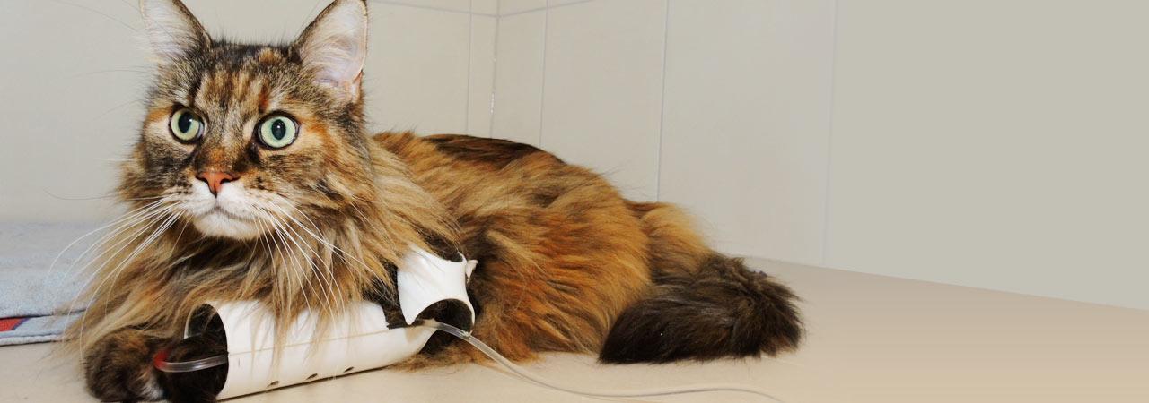 Stationäre Behandlung einer Katze