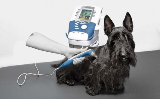 Hund wird mit dem Intelect Vet behandelt - unserem Kombigerät für Elektro-, Laser-, und/oder Ultraschalltherapie zur Verbesserung der Wundheilung, Förderung der Durchblutung und zur Muskelstärkung
