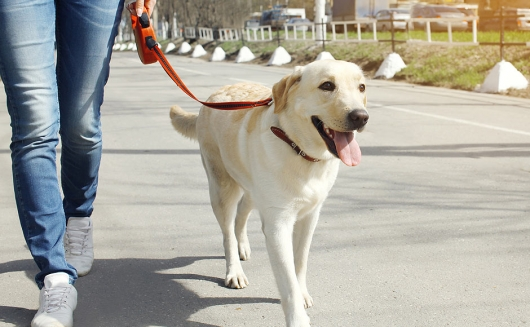 Sachkundenachweis für Hundehalter gemäß Landeshundegesetz