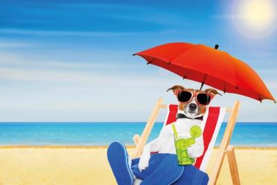 Urlaub mit Hund oder Katze